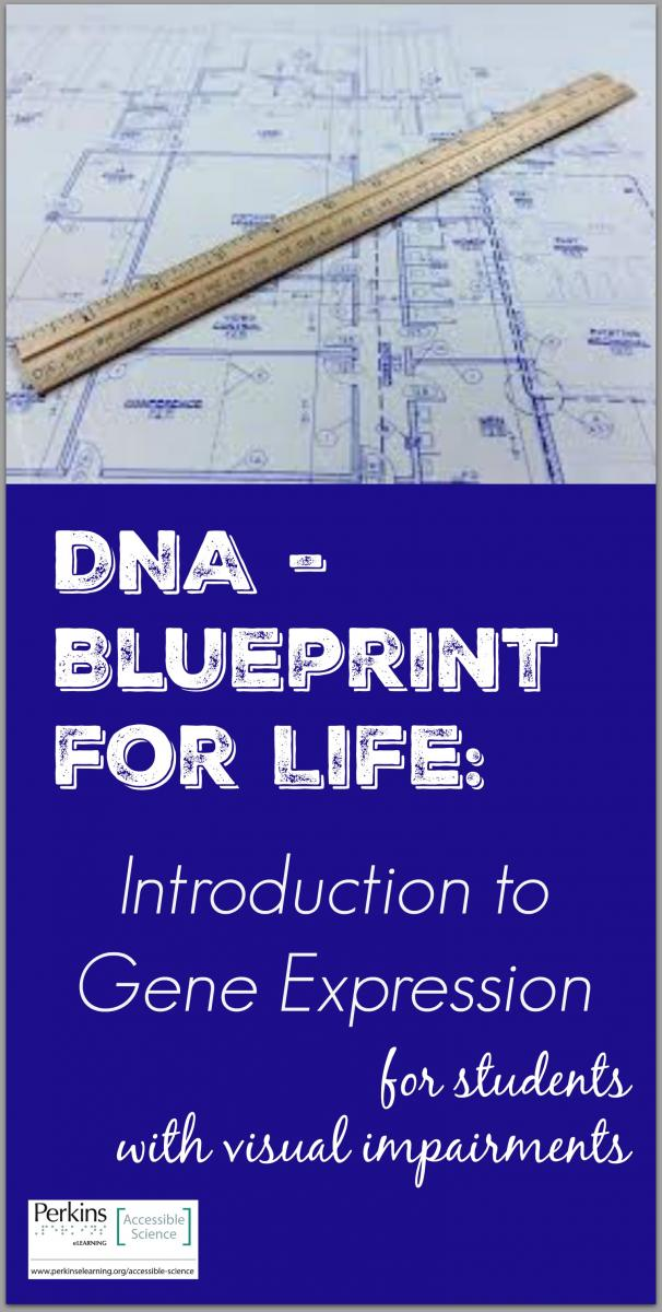 Dna blueprint for life intro to gene expression perkins elearning collage of blueprint for life malvernweather Choice Image