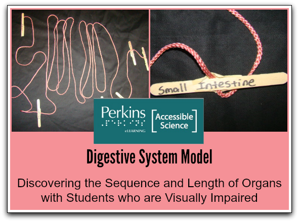 digestive system collage