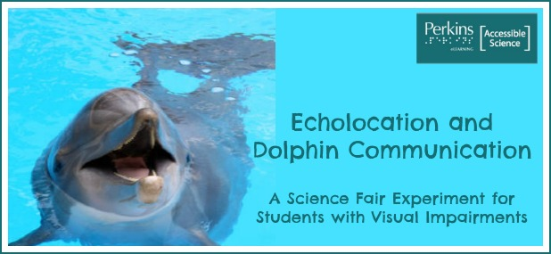 Dolphin Talk How Do Dolphins Communicate With One Another