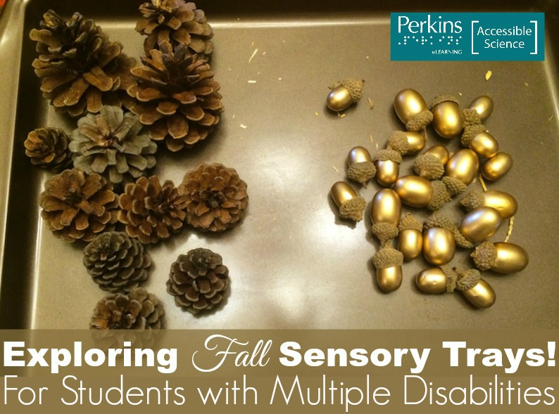 sensory trays collage