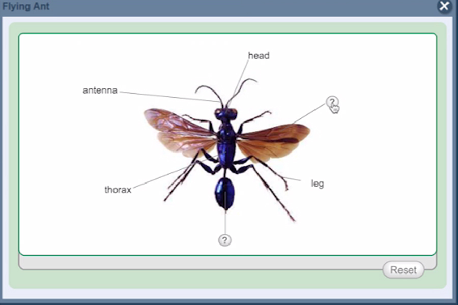 An example of a labeling exercise that shows a photo of a flying ant with six question marks that surround the photo.
