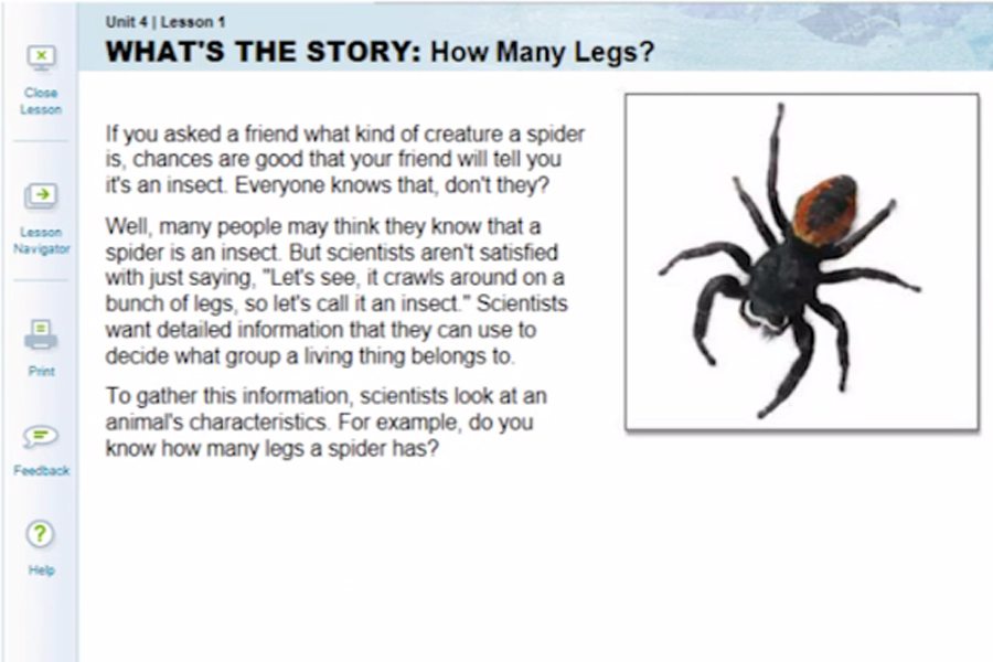 An example of a science lesson about animal classification, specifically, the differences between spiders and insects.