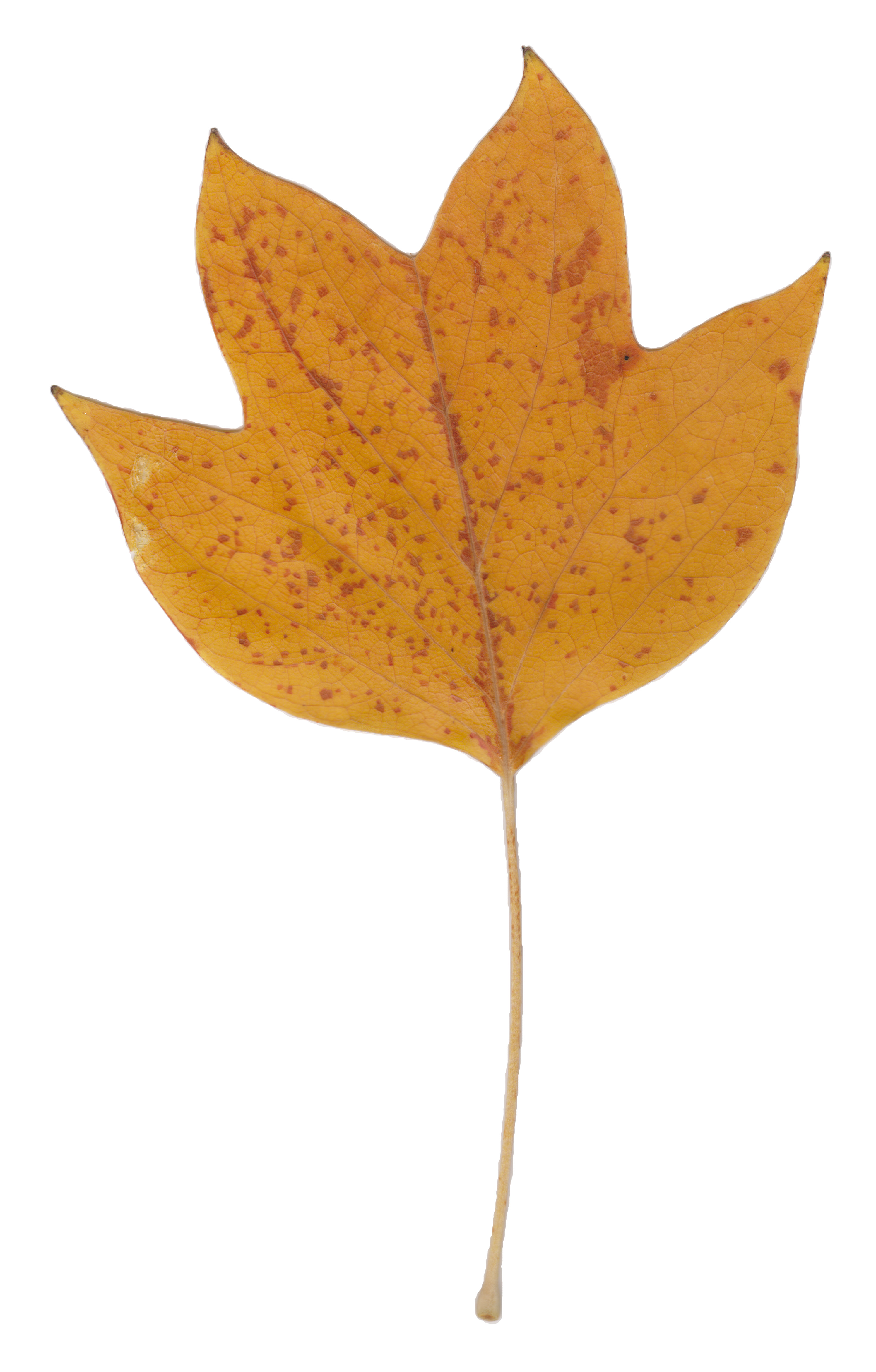 digital transitions 4 bar charts fall leaf activity paths to