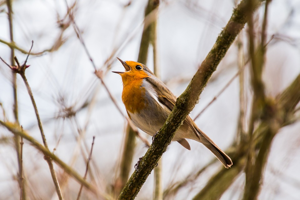 12 Birds That Sing at Night - thespruce.com