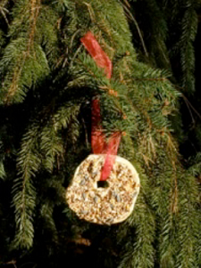the completed bagel bird treat hanging in a pine tree