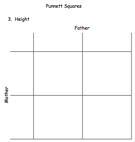 eye color punnett square