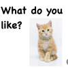 """Title page of the a digital book with a tan and white kitten and the title, """"What do you like?"""""""