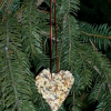 completed heart-shaped bird feed hanging in a pine tree