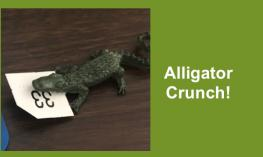 "Photo of alligator action figure with braille/print ""33"" card in his mouth and text, ""Alligator Crunch!"""