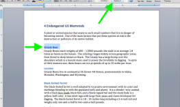 "Screenshot of the Word document, 4 Endangered US Mammals with arrows pointing to highlighted ""Grizzly Bear"" & ""Heading 2"" styles"
