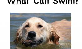Image: Cover of the book What Can Swim? Includes title and an image of a Golden Retriever swimming in the water.