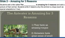 """Text: """"Slide 2: amazing for 3 reasons"""" template and screenshot of actual PPT slide 3 with anteater image and 3 reasons."""