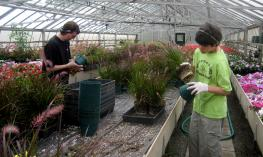 Two young adult boys watering the plants in the green house.