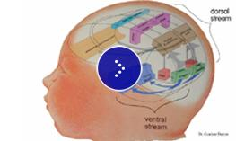 A graphic illustration of an inside of the brain.