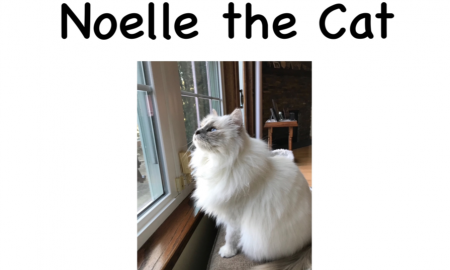 Cover of the book, Noelle the Cat. The print title and picture of a fluffy white cat sitting at a window are on the cover.