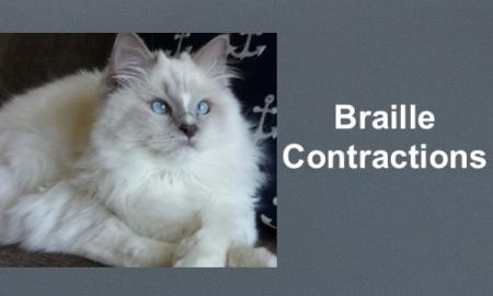 "photo of a fluffy white cat laying on the couch and text, ""Braille Contractions"""