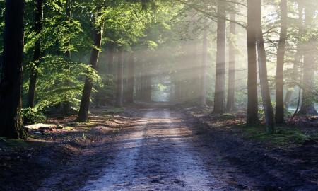 One lane dirt road through heavily wooded area with sunlight shining through the trees.