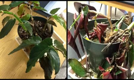 Two plants show the effects of acid rain