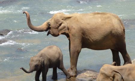 an adult and baby elephant by water