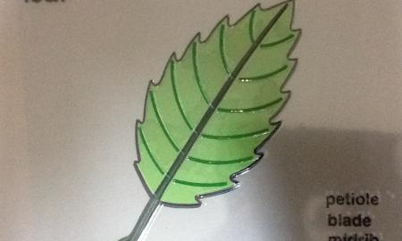Leaf tactile and large print from APH Set - Sense of Science Plants