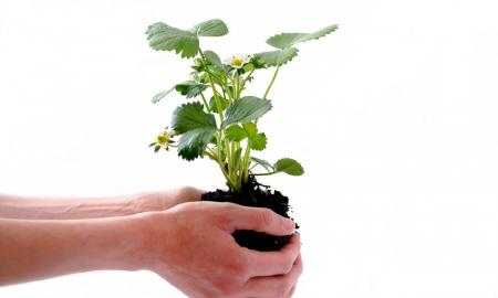 The picture is of a person holding a plant from below the roots.