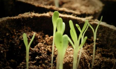 Plant sprouting