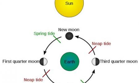Graphic of sun, moon, tides