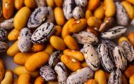 purple and orange dried beans