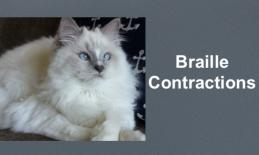 """photo of a fluffy white cat laying on the couch and text, """"Braille Contractions"""""""