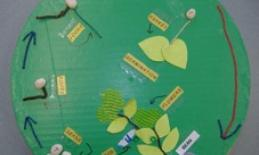 A lazy susan with tactile models representing stages of the life cycle of a plant.