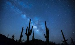 night sky with stars and cacti