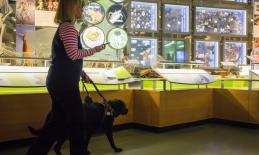 Woman with guide dog holding iPhone and traveling independently past museum exhibit.