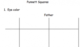 punnet square sample