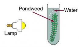a lamp pointed towards a test tube with water and a pond weed in it