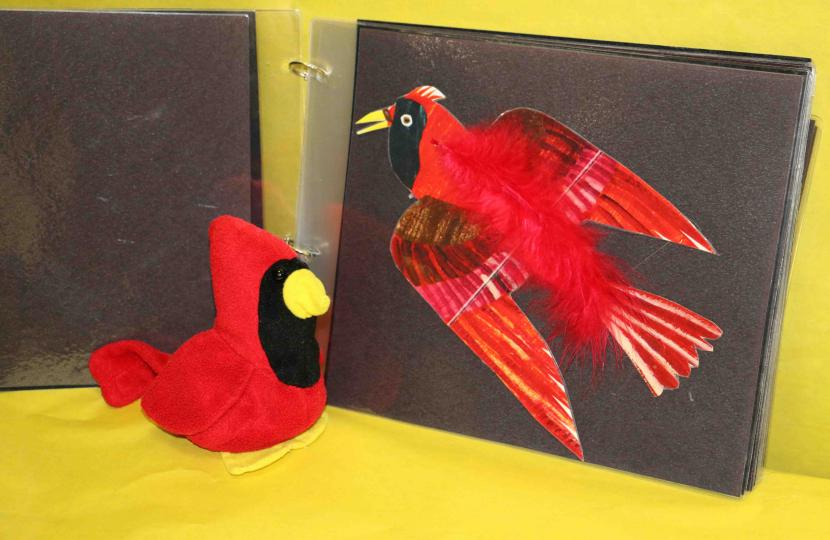 Book with red bird adapted for children with CVI