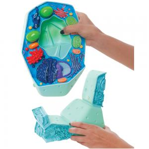The image is of the plant cell model and stand.