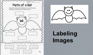 Photo of Parts of Bats original worksheet and photo of bat outline with text, Labeling Images