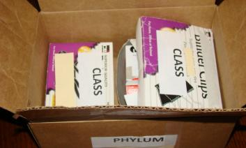 Box representing a phylum containing boxes representing classes.