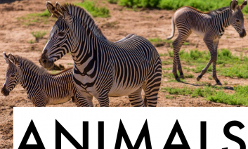 """Adult zebra with two baby zebras and the text, """"Animals""""."""