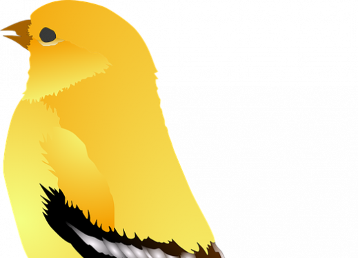 illustration of a goldfinch