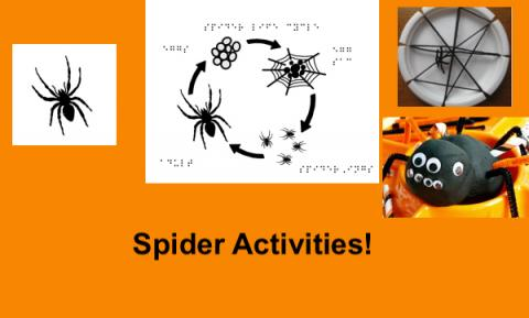"""Pictures of tactile spider, spider life cycle, and spider crafts (Play-Doh spider & spider web) and text, """"Spider Activities!"""""""