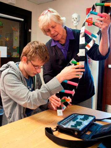 Student touching DNA model