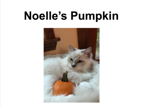 Cover page of the digital book titled Noelle's Pumpkin with an image of a fluffy white cap curled around a small orange pumpkin.