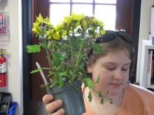 A student holds a pot of yellow flowers