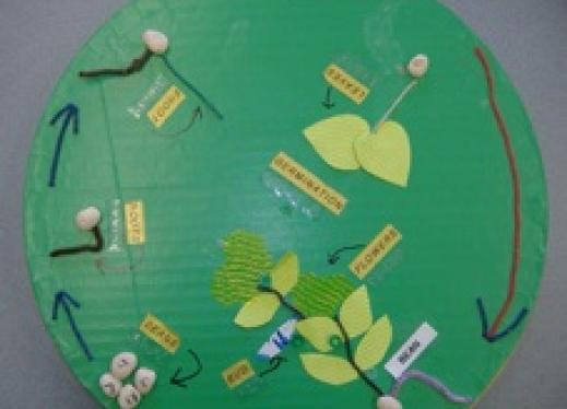 Creating a 3-D Model of a Plant Life Cycle | Perkins eLearning