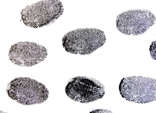 Which Fingerprint is Most Common? | Perkins eLearning