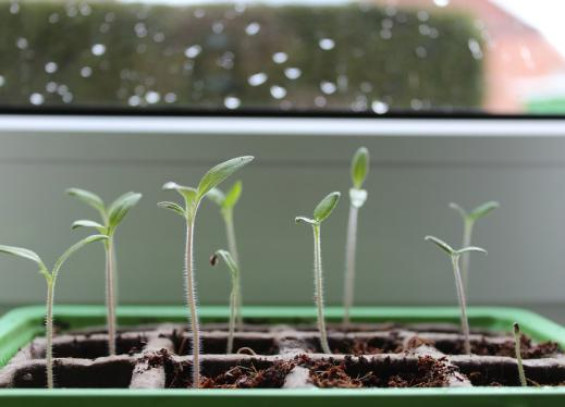 Germination: Planting Beans | Perkins eLearning