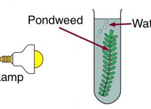 An experiment on finding the factor that can increase the rate of photosynthesis