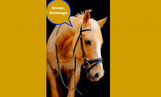 """Photo of a horse head wearing a dressage bridle with speech bubble, """"horse, dressage""""."""