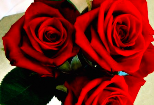 Three blooming red roses.